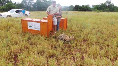 Serval Release